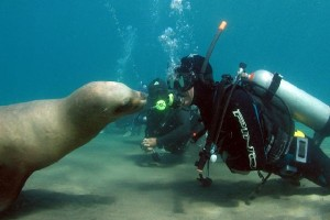 buceo puerto madryn